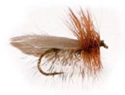 Frank B  Hall Memorial Fly Tying Contest - East Jersey Trout